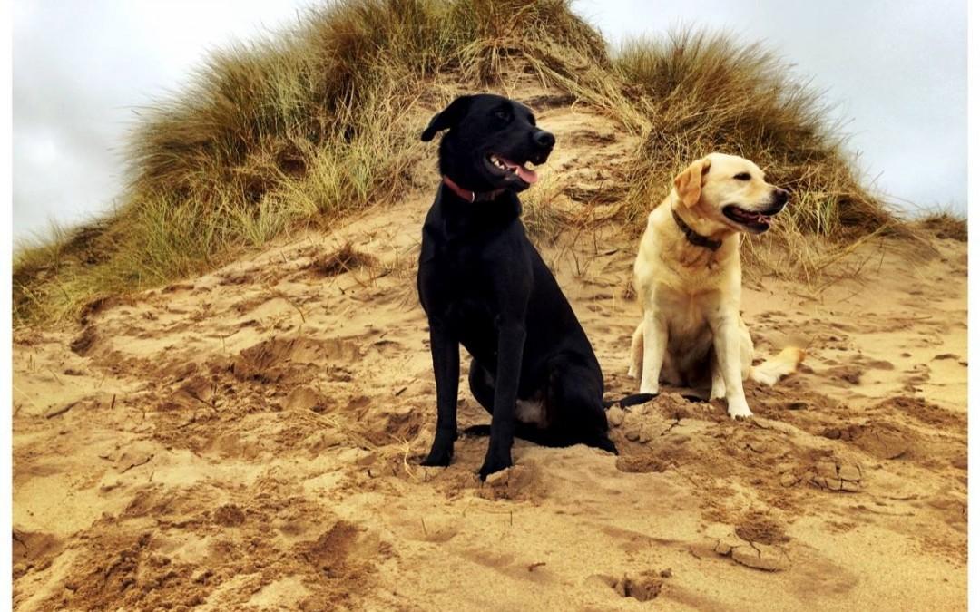 Becca and Dougie (Waf Waf)